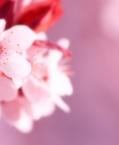 Shiatsu Disciplina del Benessere e Bionaturale